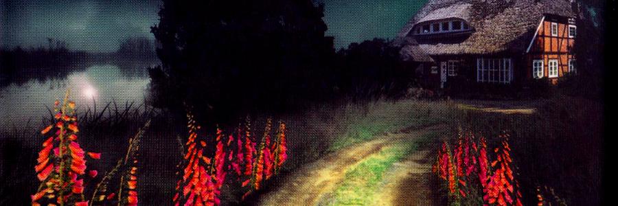 Im dunklen Holz Robert Marten Stephan M. Rother Headerbild